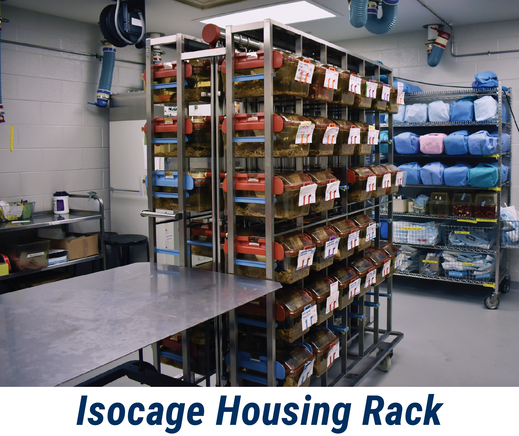 Isocage housing rack in germ-free mouse facility
