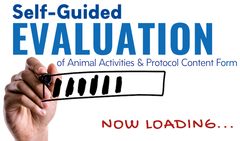 """Hand drawing on white board with label that states """"Now Loading: Self-Guided Evaluation of Animal Activities & Protocol Content Form"""""""