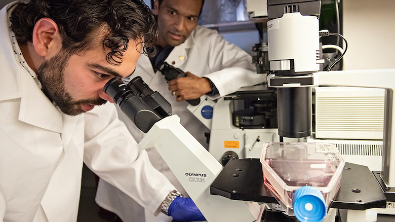 U-M researchers studying prostate cancer cell lines