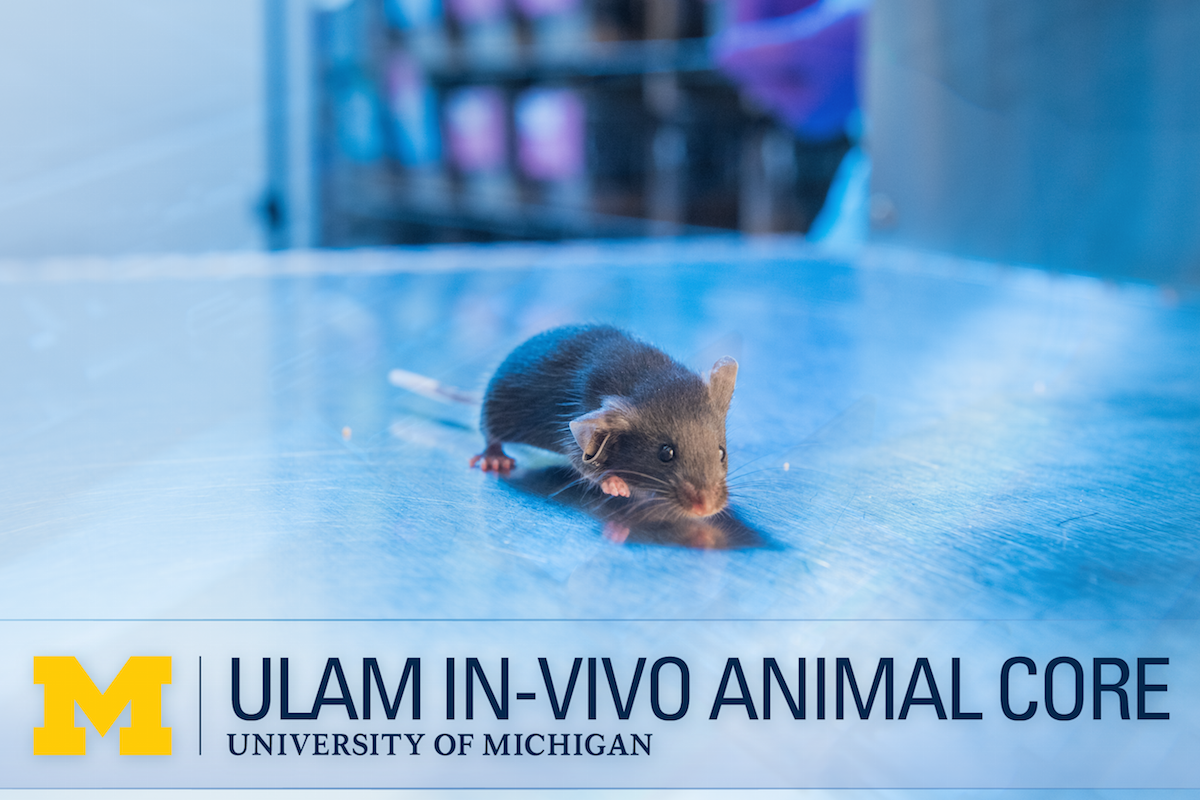 Image of black mouse with ULAM IVAC logo overlay