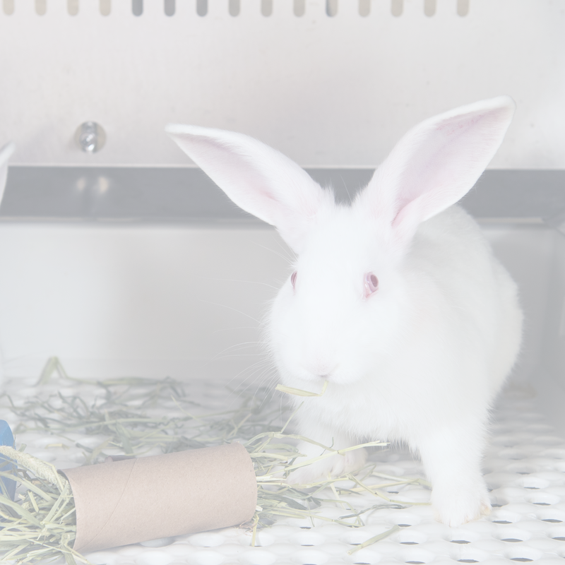 White rabbit chewing on hay