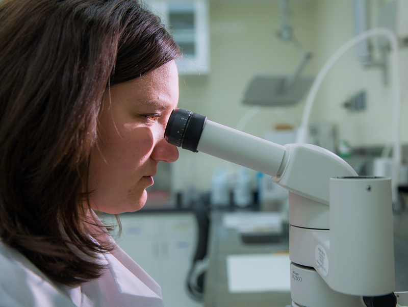 Female researcher looks into microscope in laboratory