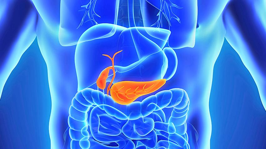 illustration showing human pancreas