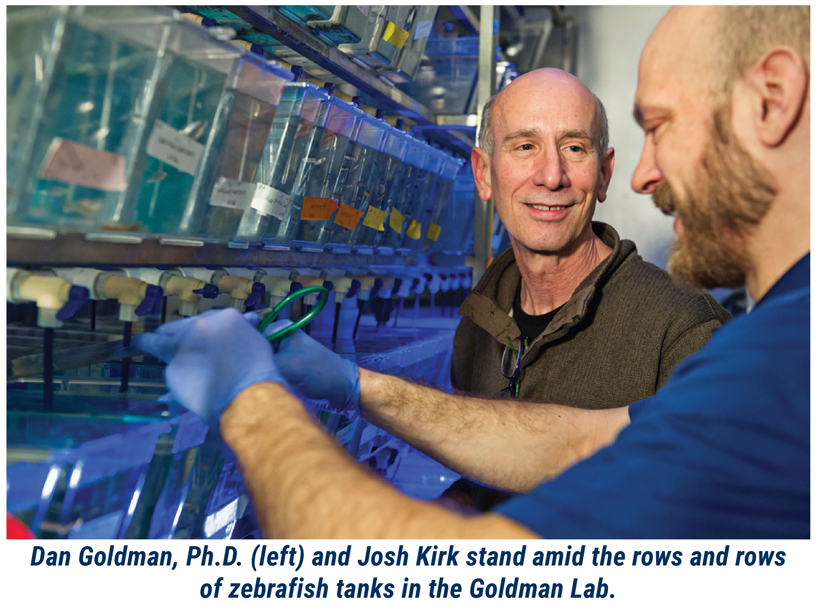 Dan Goldman, Ph.D. (left) and Josh Kirk stand amid the rows and rows of zebrafish tanks in the Goldman Lab.