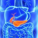 illustration showing human pancreas